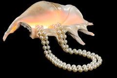 Muschel mit einer Perlenhalskette Stockbilder