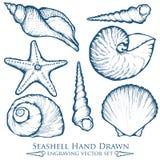 Muschel, Seeoberteil, Starfishnaturozeanwasserunterwasservektorsatz Übergeben Sie gezogene Marinestichillustration auf weißem bac Lizenzfreies Stockfoto