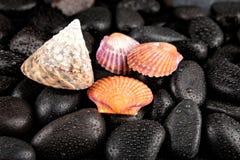 Muschel- und Badekurortsteine mit Tröpfchen auf schwarzem Hintergrund Stockbild