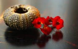 Muschel und Blume Stockfoto