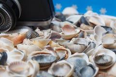 Muschel und Kamera auf dem Strand - Ferien und Reisekonzept Stockfoto