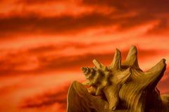 Muschel und orange Sonnenuntergang Lizenzfreie Stockfotos