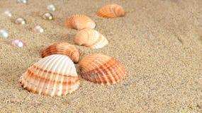 Muschel und perlen Stock Photos