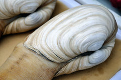 Muschelhintergrund Stockbilder