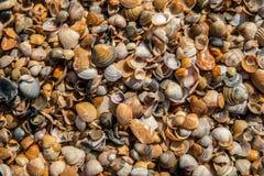 Muschelhintergrund, kleine seashels, Abschluss oben Lizenzfreie Stockbilder