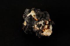 Muschelhintergrundbeschaffenheit stockfoto