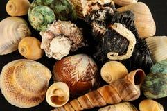 Muschelhintergrundbeschaffenheit lizenzfreie stockbilder