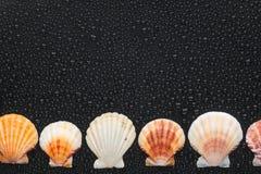 Muschellüge auf einer Ebene mit Stockbilder