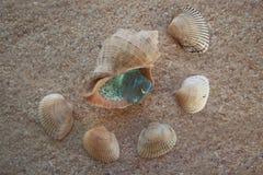 Muscheln аnd-Aquamarin auf dem Sand Lizenzfreie Stockfotos