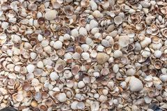 Muscheln als Hintergrund, Seeoberteilsammlung lizenzfreie stockfotos