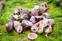 Muscheln auf dem Strand, Kanyakumari Stockfoto