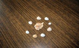Muscheln auf dem Tisch Stockfotografie