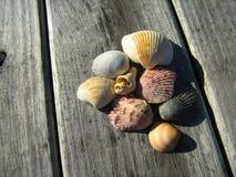 Muscheln auf Dock lizenzfreie stockfotografie