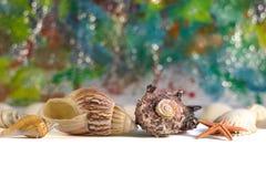 Muscheln auf einem farbigen Hintergrund mit bokeh Effekt stockbild