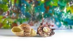 Muscheln auf einem farbigen Hintergrund mit bokeh Effekt stockfoto
