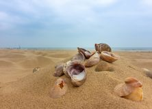 Muscheln auf einem sandigen Strand lizenzfreies stockbild
