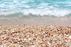 Muscheln auf einem sandigen Strand nahe dem Meer Stockfotografie