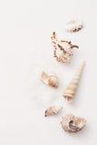 Muscheln auf einem Stapel des Salzes Stockfotografie