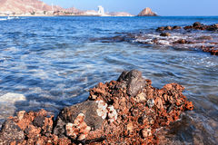 Muscheln auf Küstenfelsen im Indischen Ozean meerblick lizenzfreies stockfoto