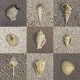 Muscheln auf Sand Stockfotos