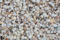 Muscheln auf Sandstrand Stockbild