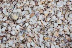 Muscheln auf Sandstrand stockfotografie