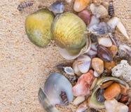 Muscheln auf Strand-Sand III Stockfotografie
