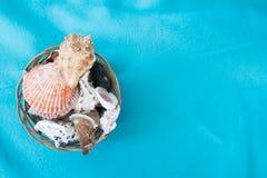 Muscheln in einem Korb Lizenzfreies Stockbild