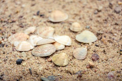 Muscheln im Sand Lizenzfreies Stockfoto