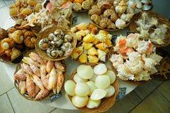 Muscheln im Speicher Stockfoto
