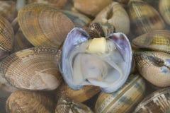 Muscheln im Wasser Stockbilder
