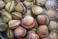 Muscheln im Wasser Stockfotos