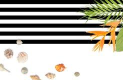 Muscheln mit tropischem Blattrahmen auf gestreiftem Schwarzweiss Stockfotografie
