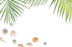 Muscheln mit tropischem Blattrahmen auf weißem Hintergrund Sommer Stockbilder