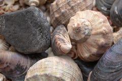 Muscheln, Seeoberteile - Beschaffenheiten oder Hintergr?nde - verschiedene Kiesel, Steine und Baumst?mpfe lizenzfreie stockfotos