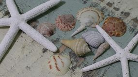 Muscheln u. Starfish Stockfotos