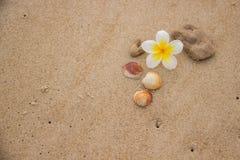 Muscheln und Blume auf dem Sand, der das Meer übersieht lizenzfreies stockfoto