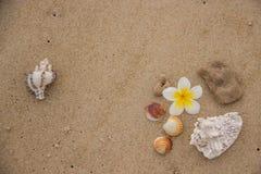 Muscheln und Blume auf dem Sand, der das Meer übersieht lizenzfreies stockbild