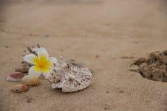 Muscheln und Blume auf dem Sand, der das Meer übersieht lizenzfreie stockfotografie