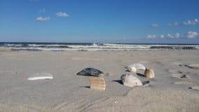 Muscheln und der Ozean Stockfotos