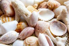 Muscheln und Korallen am Baumwollstoffhintergrund stockbild