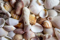 Muscheln und Korallen am Baumwollstoffhintergrund lizenzfreie stockfotos
