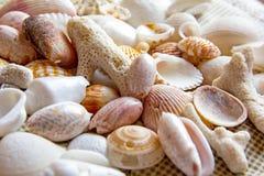 Muscheln und Korallen am Baumwollstoffhintergrund stockfoto