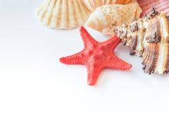 Muscheln und Starfish Lizenzfreie Stockfotos