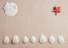 Muscheln und Starfish auf hölzernem Hintergrund mit copyspace lizenzfreie stockfotos