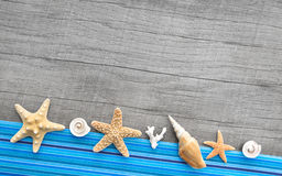 Muscheln und Starfishes auf grauem hölzernem Hintergrund Stockbilder