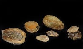Muscheln versteinert mit einer Kruste bedeckt stockbilder