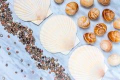 Muscheln von verschiedenen Größen auf blauem Marmorhintergrund Stockbilder