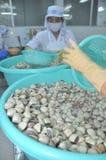 Muscheln werden in einer Verarbeitungsanlage der Meeresfrüchte in Tien Giang, eine Provinz im der Mekong-Delta von Vietnam gewasc Lizenzfreie Stockfotos