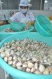Muscheln werden in einer Verarbeitungsanlage der Meeresfrüchte in Tien Giang, eine Provinz im der Mekong-Delta von Vietnam gewasc Stockbilder